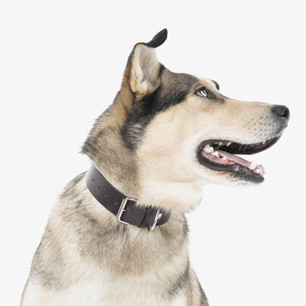 Hundehalsbänder & Leihnen ZAHA | Landanzeiger-Shopping