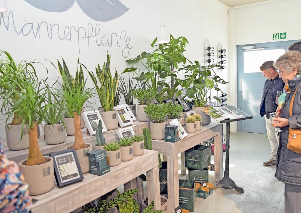 Männerpflanzen Schaufelbühl Blumen | Landanzeiger-Shopping