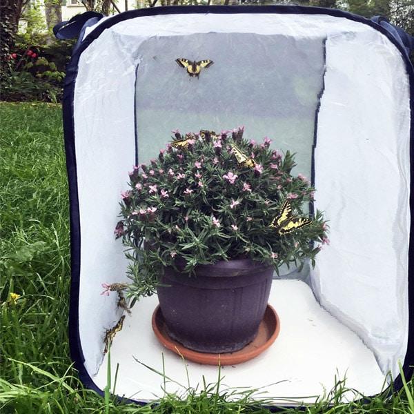 Schmetterlinge züchten | Landanzeiger-Shopping