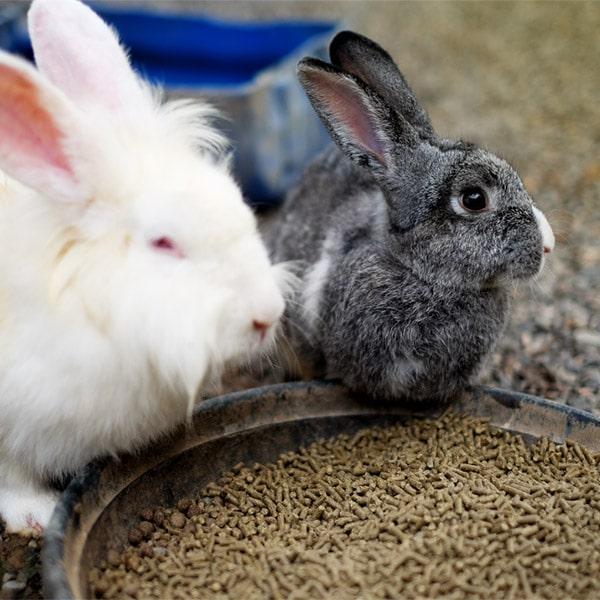 Kaninchen Würfel mit Fenchel   Landanzeiger-Shopping