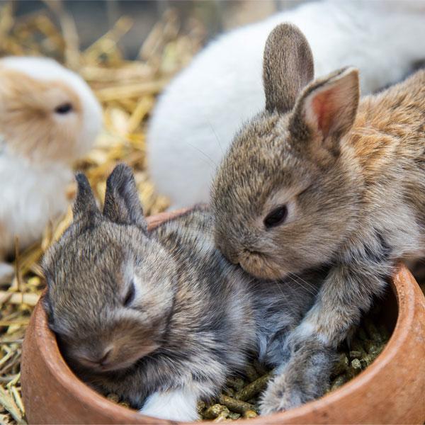 Kaninchen Kombi-Futter Aufzucht   Landanzeiger-Shopping