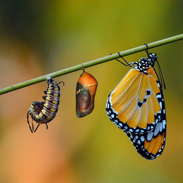 Kurs Schmetterlinge züchten (Fortgeschrittene) | Landanzeiger-Shopping