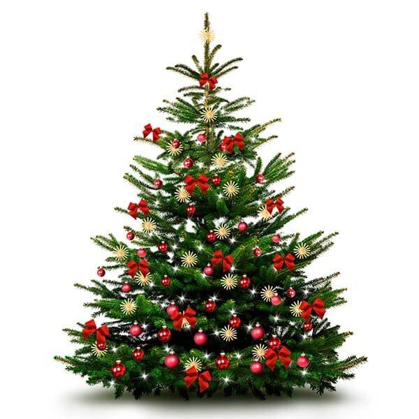 Weihnachtsbaum aus Gemeinden der Region Aarau | Landanzeiger-Shopping