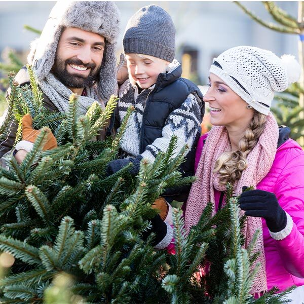 Weihnachtsbaumverkäufe in den Gemeinden 2020 | Landanzeiger-Shopping
